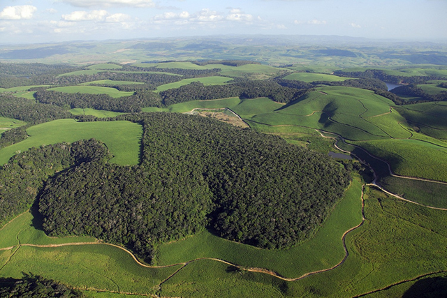 Aerial view of forest fragments of the Brazilian Atlantic rainforest in Northeastern Brazil (Mata Atlântica), surrounded by sugar cane plantations. Photo: Mateus Dantas de Paula