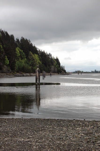 An overcast day at Taylor Shellfish Farm. / Credit: Bellingham Whatcom County Tourism