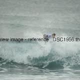 _DSC1956.thumb.jpg