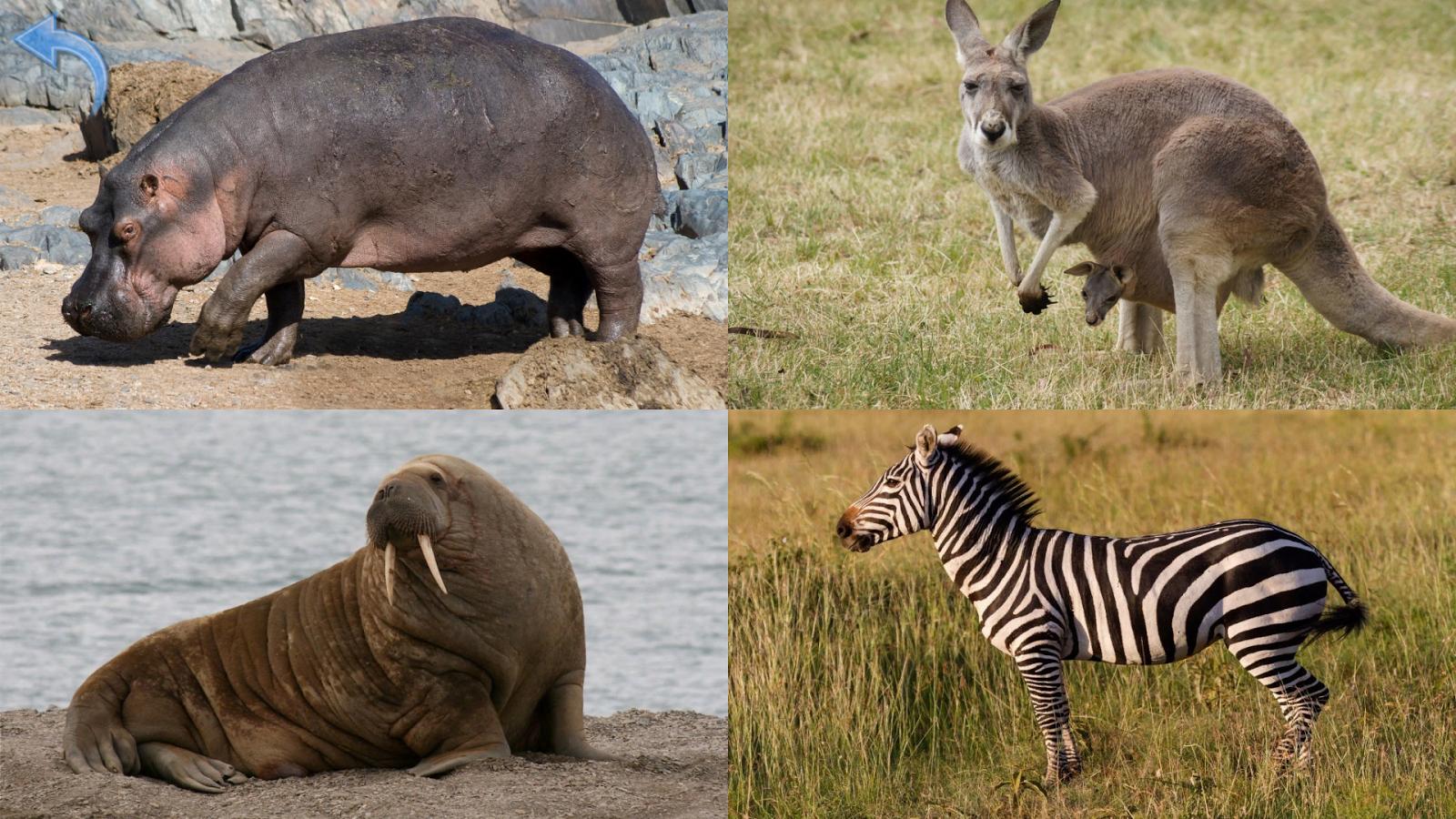 Cris d animaux pour les enfants jeux b b gratuit - Image d animaux gratuit ...