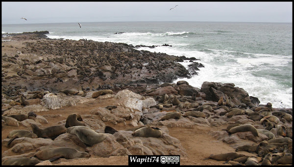 Balade australe... 11 jours en Namibie IMG_181