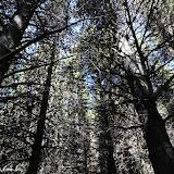 Floresta de pinheiros, Reserva Nacional Coihayque, Chile