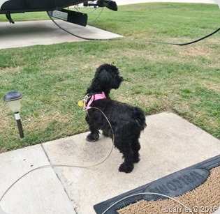 Maggie outdoor time 04162016