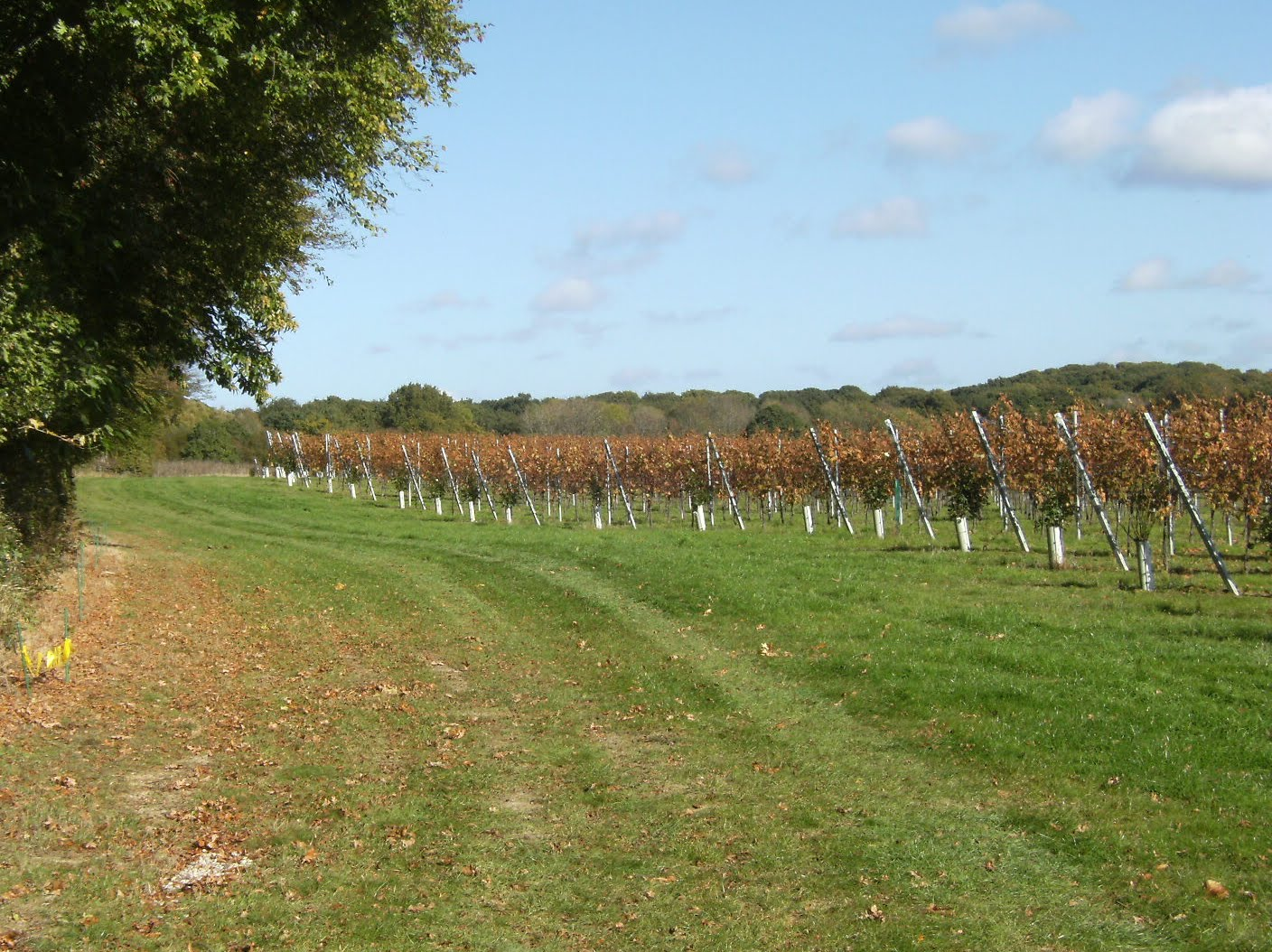 1010240042 Vineyard, Appledore Heath