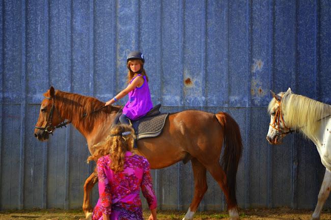 la f^te  du club  hippique  dans les chevaux