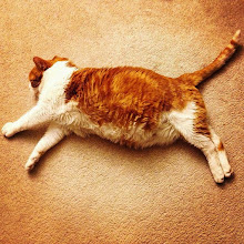 Photo: Mr. Tom's Sleeping Artistry #intercer #pet #pets #petsofinstagram #cat #cats #catsofinstagram #sleep #sweet #pretty #cute #portrait #position #orange #white #body #rest #artist - via Instagram, http://ift.tt/1BFBx6X