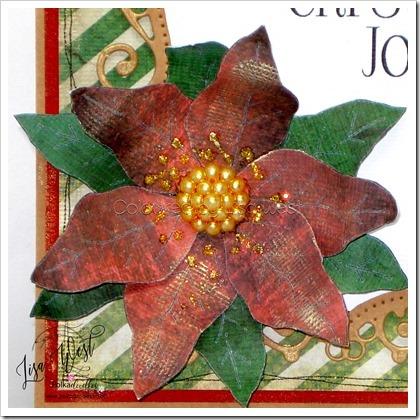 Poinsettia (3)