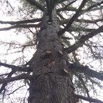 Kainua citta etrusca un albero che conosce tutta la storia.jpg