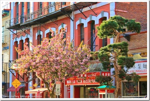 160410_Victoria_Chinatown_0004