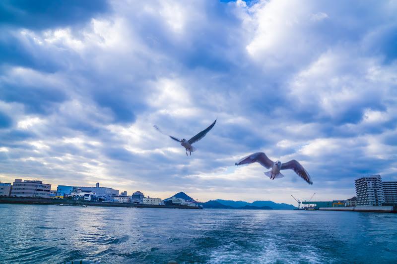 Hiroshima Miyajima World Heritage Sea Route seagulls2