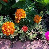 Gardening 2010, Part Two - 101_3272.JPG