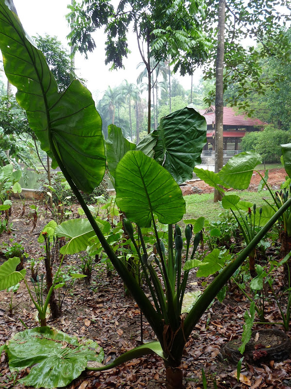 Jardin botanique de Jing Hong
