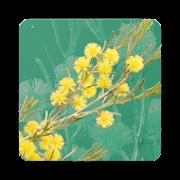 App Icon for Wattle - Acacias of Australia App in Czech Republic Google Play Store