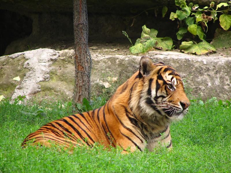 Warszawskie zoo - img_6349.jpg