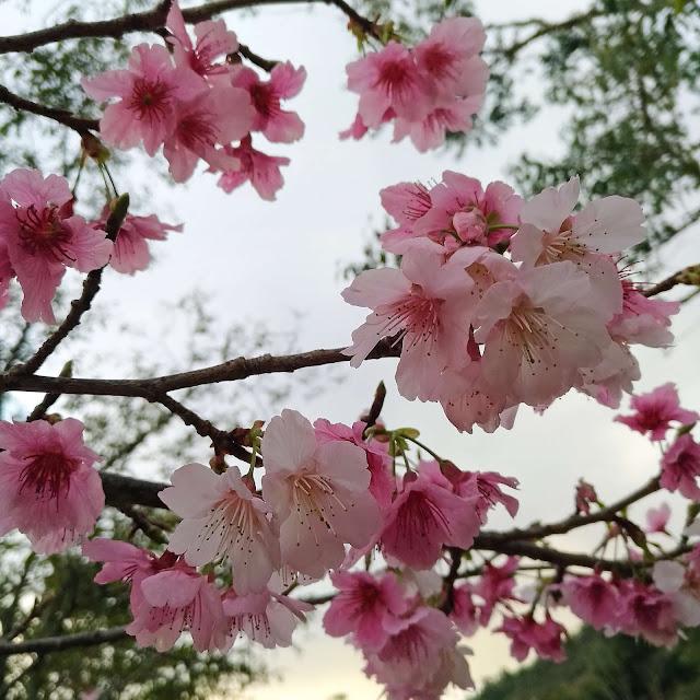 Cerejeiras, Pedra Azul, ES.