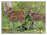 _MG_4041_www.keralapix.com_Mudumalai Bandipur Forest Road
