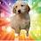 calla lily's profile photo