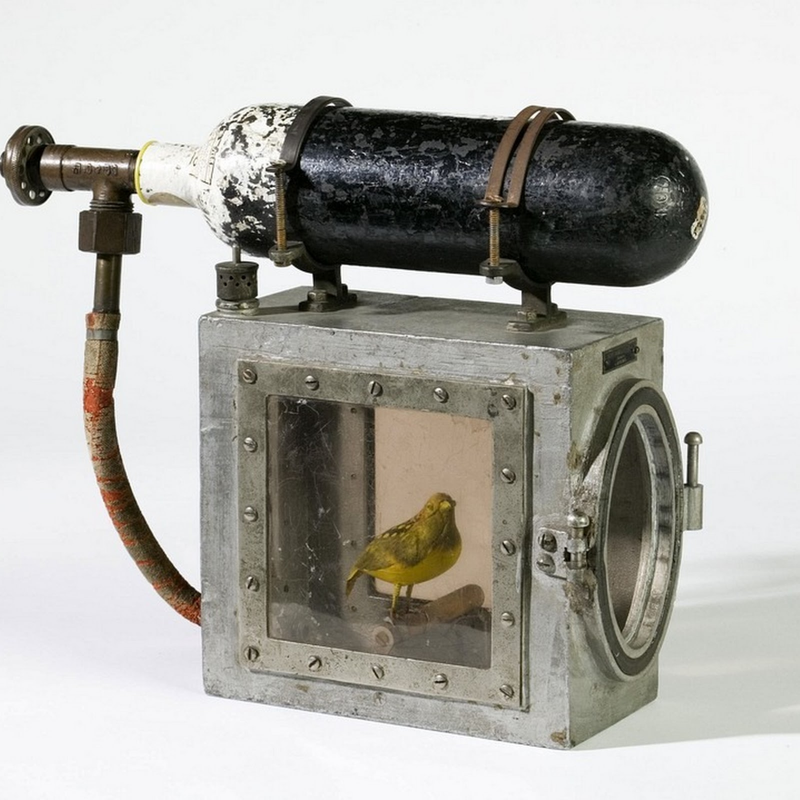 Canaries As Poisonous Gas Detectors