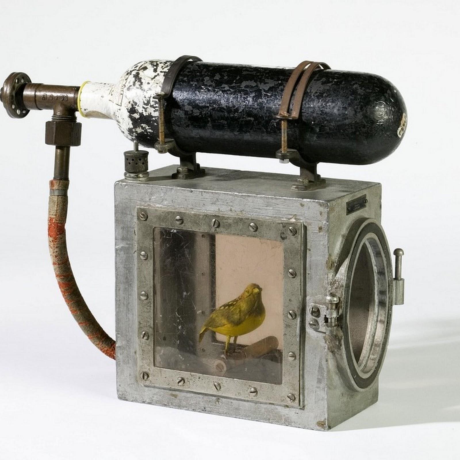 Canaries As Poisonous Gas Detectors
