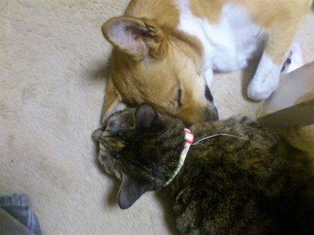 猫と一緒に寝る犬