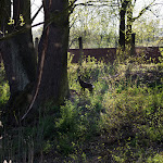2015.04.23.,Klasztor wiosną,fot.H.L (12).jpg