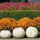 10-26-14 Dallas Arboretum - _IGP4272.JPG