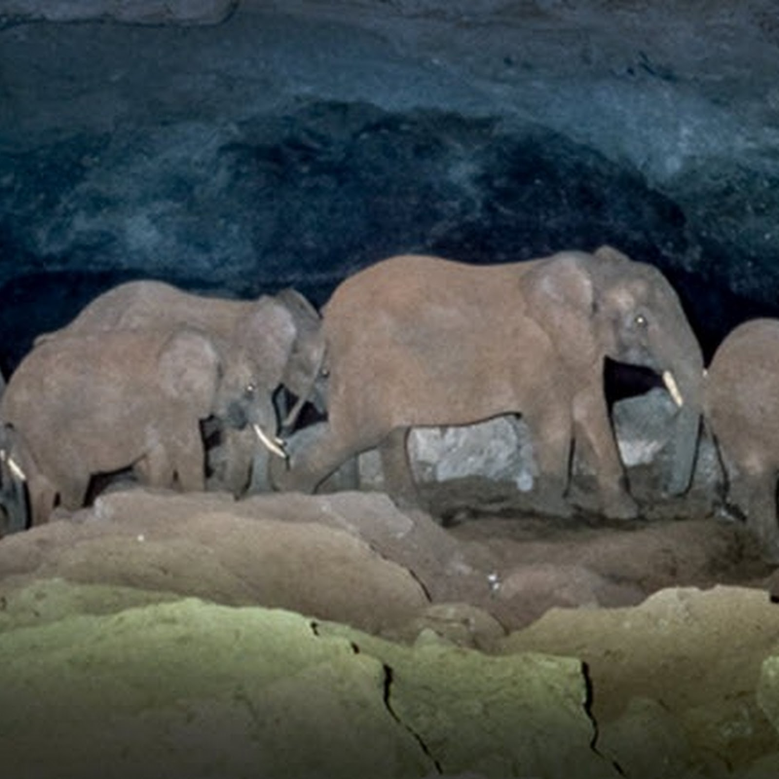 The Salt Mining Elephants of Mount Elgon