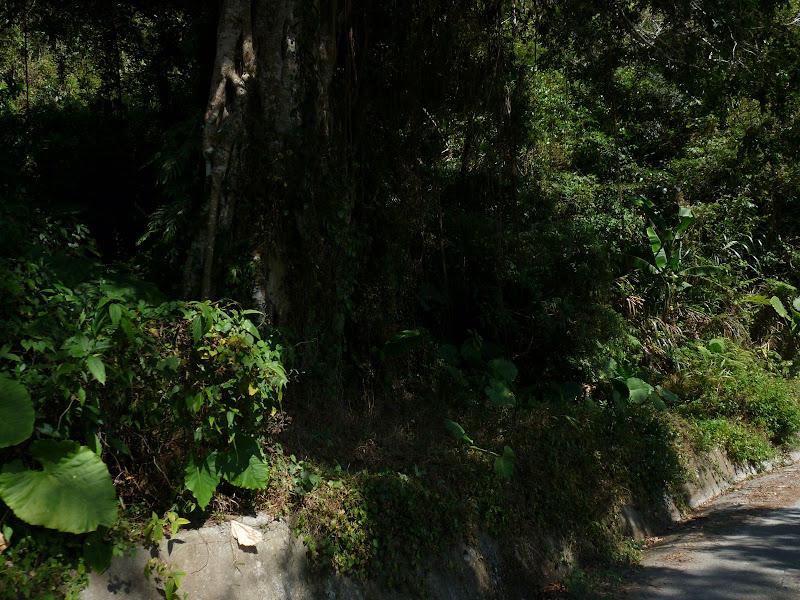 TAIWAN  5 days Around Taiwan Fevrier 2009 - autourdetaiwan%2B064.jpg