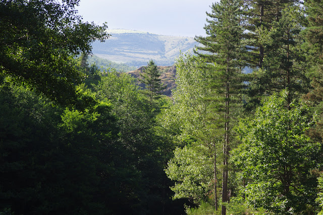 Chemin de La Rodé, 620 m, Cocurès (Lozère), 8 août 2013. Photo : J.-M. Gayman