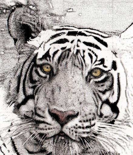 tigereye-2015-03-9-19-49.jpg