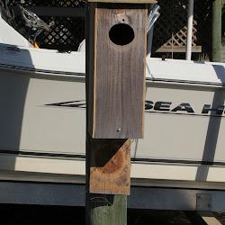 Fowl Duck Box 2013 034