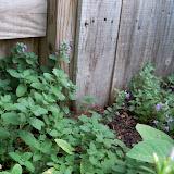 Gardening 2011 - 100_8165.JPG