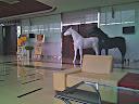 2012-03-12_12-41-31_HDR.jpg