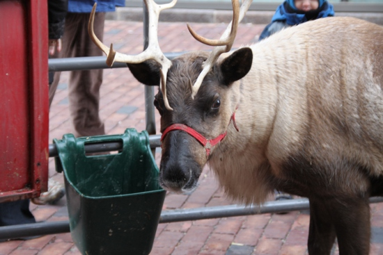 Do reindeer naturally look this sad?
