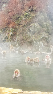 The Snow Monkeys of Jigokudani Yaen Koen Monkey Park - it was fascinating for a while watching the expressions of this monkey as it relaxed in the hot onsen water, and did little details with its face and hands that seemed so human