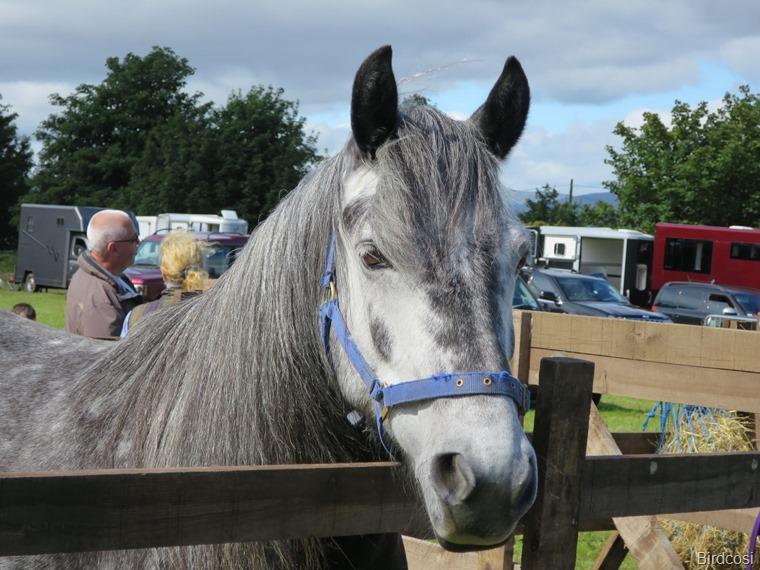 Pony Highlands
