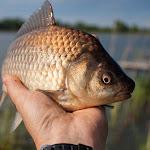 20140517_Fishing_Bochanytsia_026.jpg
