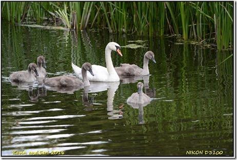Bradgate Park - July