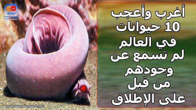 اغرب واعجب 10 حيوانات في العالم لم تسمع عن وجودهم من قبل على الاطلاق