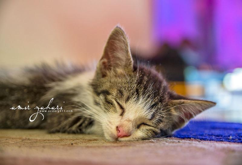 Firmax3 Merawat Kucing Tempang Dalam Masa 3 Hari, Firmax3, Krim Nano Firmax3, RF3 World, Krim Ajaib, Tempang, Kucing Sakit, Merawat Kucing Sakit, Anak Kucing, Kitty, Kitten