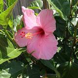Gardening 2012 - IMG_3831.JPG
