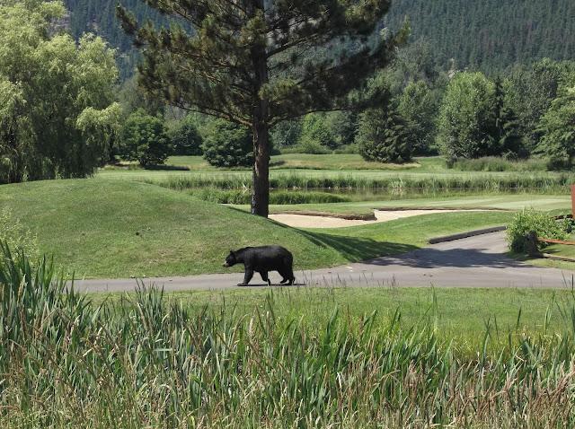 SGS FUNdraiser Golf tournament 2012 - DSCF1177.jpg