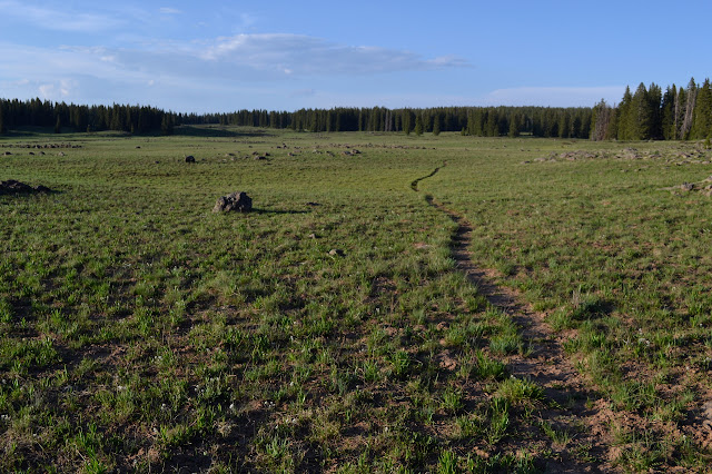 trail through the meadow