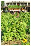 DSC_0019_keralapix.com_banana market