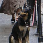 Another Polish dog