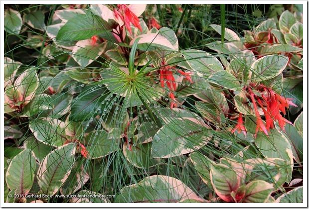 160906_Butchart_Gardens_0073
