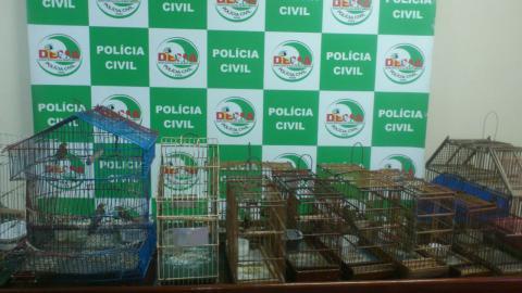 Polícia Civil apreende 20 aves que eram vítimas de maus-tratos em Belém