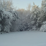 Backyard snow.jpg
