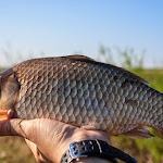 20150427_Fishing_Prylbychi_047.jpg