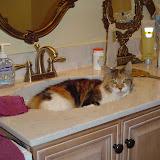 Riley in the bathroom sink.